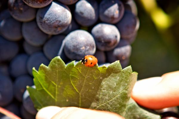 vinul saptamanii organic sa bio